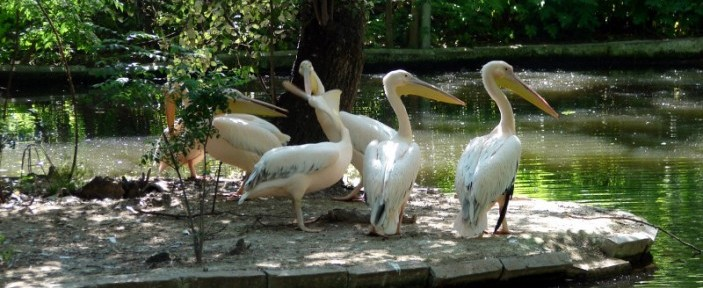 A frame from Varna Zoo